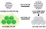 국민대 이현정 교수팀, 하이드로젤 비드를 이용한 고성능 TNT 감지 센서 개발